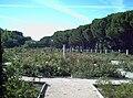 Rosaleda del Parque del Oeste (Madrid) 17.jpg