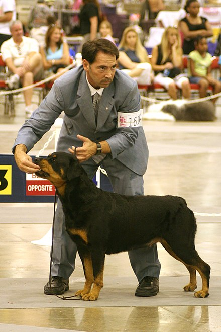 Rottweiler breed competition at the Reliant Arena American Kennel Club World Series Dog Show July 23, 2006.