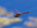 Rubbish photo of Dragonfly flying past 2 (6001606857).jpg