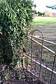 Rusty old gate, Attenborough Cricket ground - geograph.org.uk - 679987.jpg