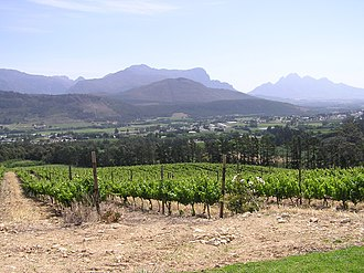 Economic history of South Africa - The VOC period and the birth of the South African wine industry. Vineyard in the Paarl ward of Franschhoek (Western Cape Province).