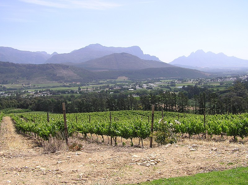Vineyards in Paarl, South Africa