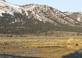 Sage grouse lek myatt (7591212512).jpg