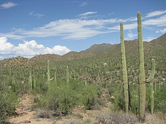 Saguaro National Park - A view of Saguaro National Park's natural landscape.