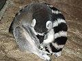 Saint Louis Zoo 013.jpg