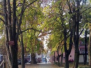 Šamac, Bosnia and Herzegovina Town and municipality in Republika Srpska, Bosnia and Herzegovina