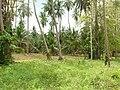 Samui 2013 May - panoramio (14).jpg