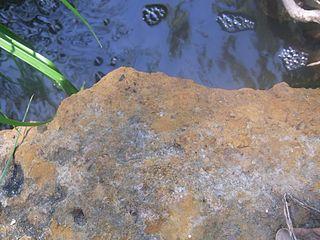 Minchinbury Sandstone Sandy barrier island complex. Fine to medium-grained lithic sandstone.