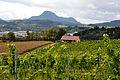 Sankt Veit an der Glan Glandorf 22 Weingut Vinum VIRUNUM 28092010 61.jpg