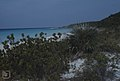 Scaevola plumieri, coccothrinax argentea (24998812598).jpg