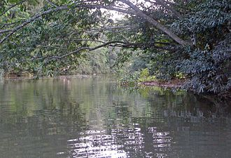 Macal River - Looking upriver in the lower Macal River.