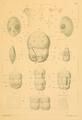 Schewiakoff6.PNG