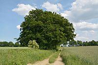 Schleswig-Holstein, Warringholz, Naturdenkmal NIK 6606.JPG