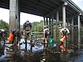 Searchers looking for mussels (6862859270).jpg