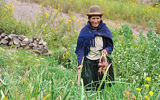 USC Canada - Sebastiana Montan is a small-scale farmer in Panacachi, Bolivia who works with USC Canada. (Photo: Kath Clark/USC Canada)