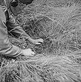Serie Landmijnen ruimen in Hoek van Holland, Bestanddeelnr 900-6461.jpg