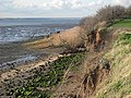 Shallow cliffs on north Stour shore - geograph.org.uk - 661377.jpg