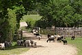 Sheep crossing Moor Bridge, Penn Common, New Forest - geograph.org.uk - 442362.jpg