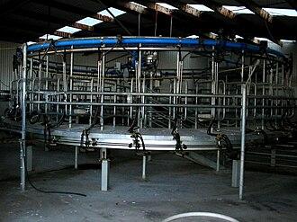 Sheep milk - Mechanical sheep milker, South Island, NZ