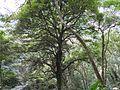 Shimen Old Trail 石門古道 - panoramio.jpg
