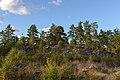 Skansbergets fornborg September 2013 01.jpg