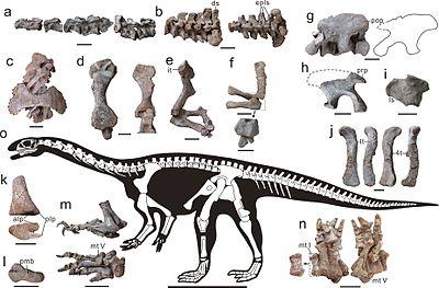 Skeleton Xingxiulong.jpg