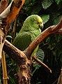 Sleeping parrot (5290088151).jpg