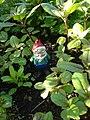 Small garden gnome.jpg