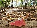 Smith Nature Park and Slyh Run (30474820661).jpg
