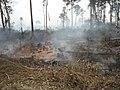 Smoldering peat fire (6058191729).jpg