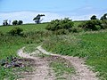 South West Coast Path near Upwey - geograph.org.uk - 1359551.jpg
