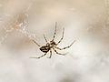 Spider (9669144212).jpg