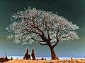Spiritual Tree dsc06786 duo nevit.jpg