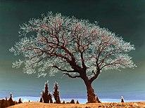 Spiritual Tree dsc06786 duo nevit