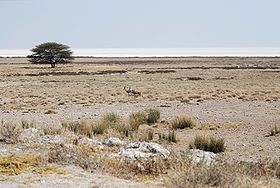 Image illustrative de l'article Parc national d'Etosha