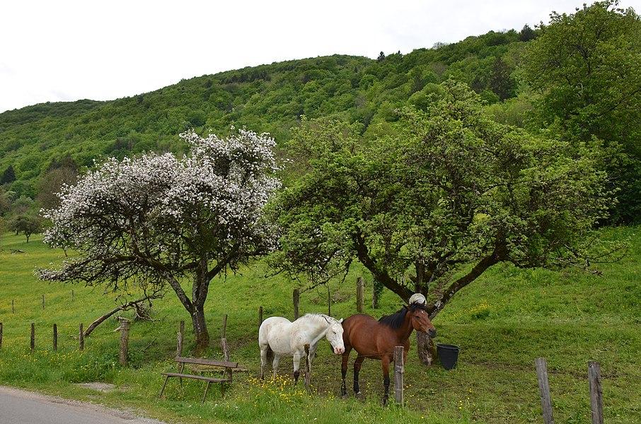 Springtime with blossom trees at Veuillafans Jura