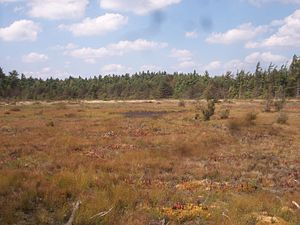Forbes State Forest - Spruce Flats Bog, which was formed in 1908 after the area was deforested and a subsequent fire altered the composition of the soil.