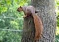 Squirrel 05 (6994360837).jpg