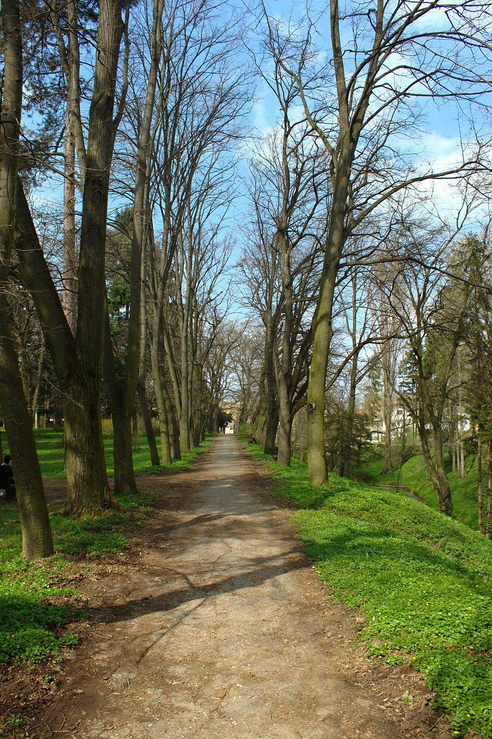 Sremski Karlovci, Dvorska bašta, alej
