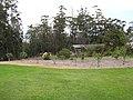 Starr-120426-5231-Pyrus communis-in orchard-Hawea Pl Olinda-Maui (25140494825).jpg