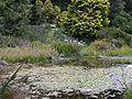Strybing Arboretum pond.jpg