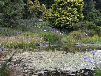 San Francisco Botanical Garden - Pond at Dwarf Conifer collection of SF Botanical Garden