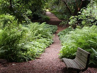 San Francisco Botanical Garden - Redwood trail