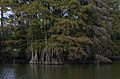 Stumpy Lake stumps 1 LR.jpg