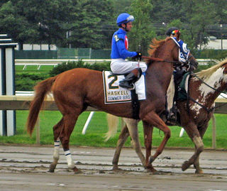American-bred Thoroughbred racehorse