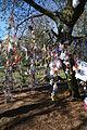 Suttertree albero dei ciucci.jpg