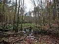 Swamp next to the Teufelsbruch swamp in autumn 3.jpg