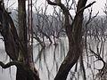 Swamps of Dudhwa National Park.jpg