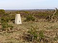 Sway triangulation pillar, Blackhamsley Hill, New Forest - geograph.org.uk - 397097.jpg
