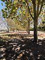 Sydney Olympic Park NSW 2127, Australia - panoramio - Halooch (1).jpg